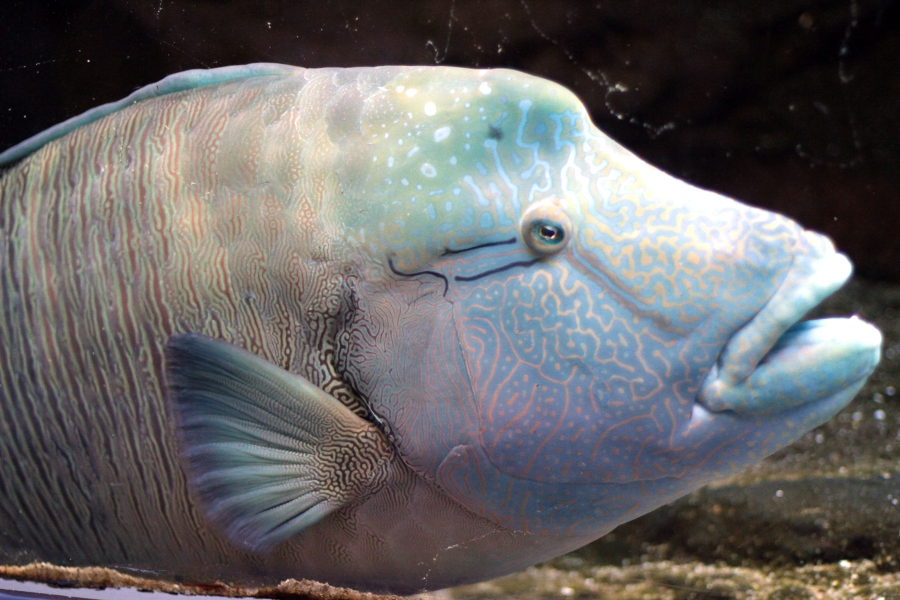 fish1_900x600.JPG