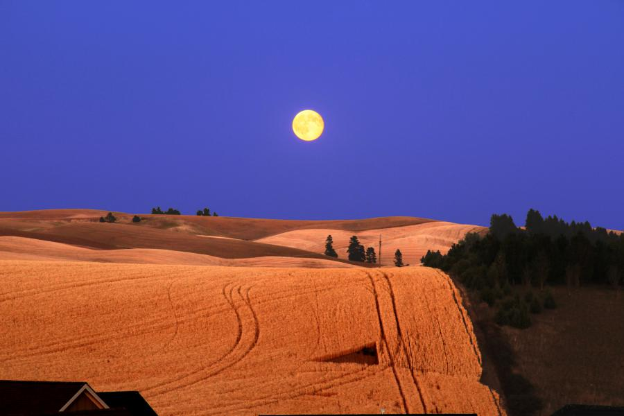 moonrise_900x600.jpg
